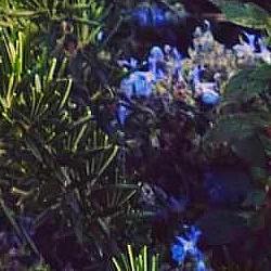 romaní florit